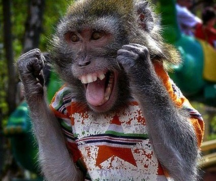 boxing-monkey-big