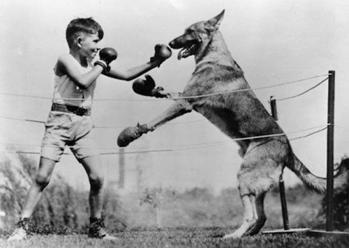 kid-boxing-dog
