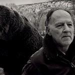 herzog_bear