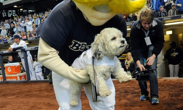 Hank the Dog