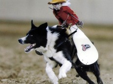 Monkey_Riding_a_Dog[1]