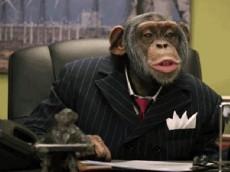executive_monkey2[1]