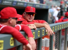 MINNEAPOLIS, MN - SEPTEMBER 20:  Mike Scioscia #14 Manager of the Los Angeles Angels talks with his coaching staff prior to the MLB game against the Minnesota Twins at Target Field on September 20, 2015 in Minneapolis, Minnesota.  (Photo by David Sherman/Getty Images)