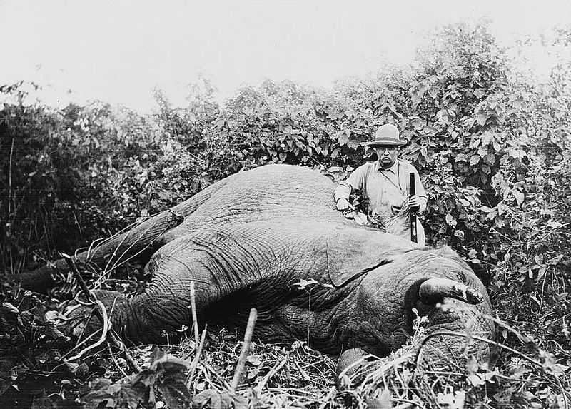 800px-roosevelt_safari_elephant
