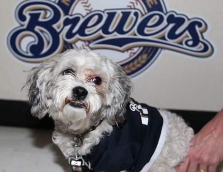 Hank+Dog+San+Diego+Padres+v+Milwaukee+Brewers+otJJa9YIdBjl