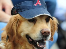 ATLANTA, GA - MAY 5: The Atlanta Braves host Bark In The Park for fans to bring their dogs to the game against the New York Mets at Turner Field on May 5, 2013 in Atlanta, Georgia. (Photo by Scott Cunningham/Getty Images)