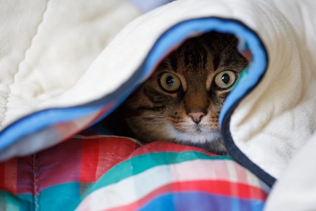 Cat-undercover-e1471840807148