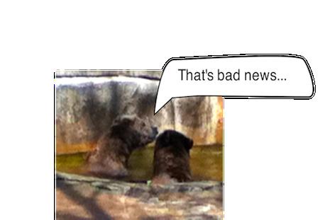 thatsbadnews BearsBearsBears