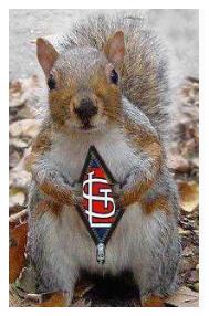 RallySquirrel