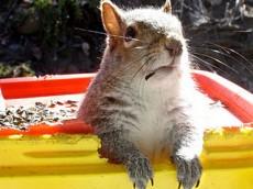 sad_squirrel