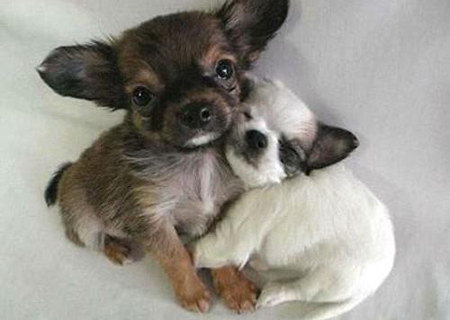 puppy-hugs-040