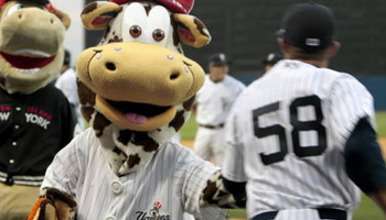 scooter the cow