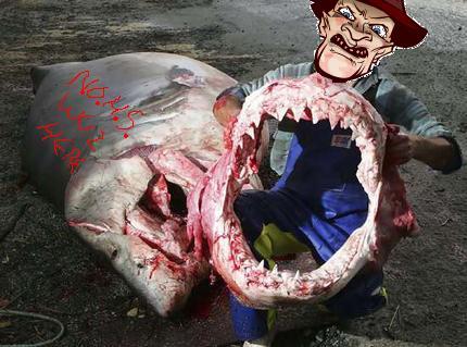 shark-caught