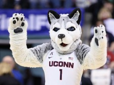 INDIANAPOLIS, IN - APRIL 03:  Jonathan the Husky, mascot for the Connecticut Huskies, performs against the Oregon State Beavers in the second quarter during the semifinals of the 2016 NCAA Women's Final Four Basketball Championship at Bankers Life Fieldhouse on April 3, 2016 in Indianapolis, Indiana.  (Photo by Andy Lyons/Getty Images)