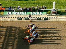 ELMONT, NY - JUNE 06:  The field leaves the starting gate at the beginning of the 147th running of the Belmont Stakes at Belmont Park on June 6, 2015 in Elmont, New York.  (Photo by Al Bello/Getty Images)