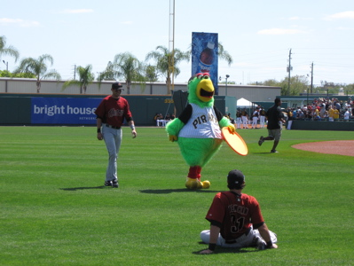 Pirate Parrot Astros