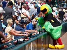 BRADENTON, FL - MARCH 5: Pittsburgh Pirates mascot jokes with a fan before the game against the New York Yankees at McKechnie Field on March 5, 2015 in Bradenton, Florida. (Photo by Joe Robbins/Getty Images)
