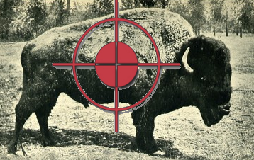 buffalosight