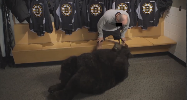 John-Whitesides-Bear-Boston-Bruins