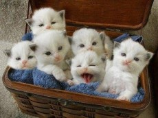 66640-Basket-Full-Of-Kittens