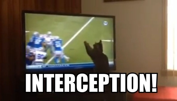 cat intercepts matthew stafford