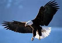 Eaglesschedule
