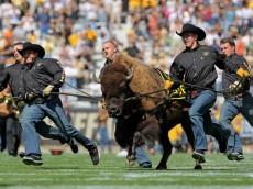 Ralphie Colorado Buffaloes