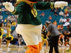 LAS VEGAS, NV - MARCH 12:  Oregon Ducks mascot The Duck performs during a first-round game of the Pac-12 Basketball Tournament against the Oregon State Beavers at the MGM Grand Garden Arena on March 12, 2014 in Las Vegas, Nevada. Oregon won 88-74.  (Photo by Ethan Miller/Getty Images)
