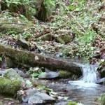 Tryon Creek State