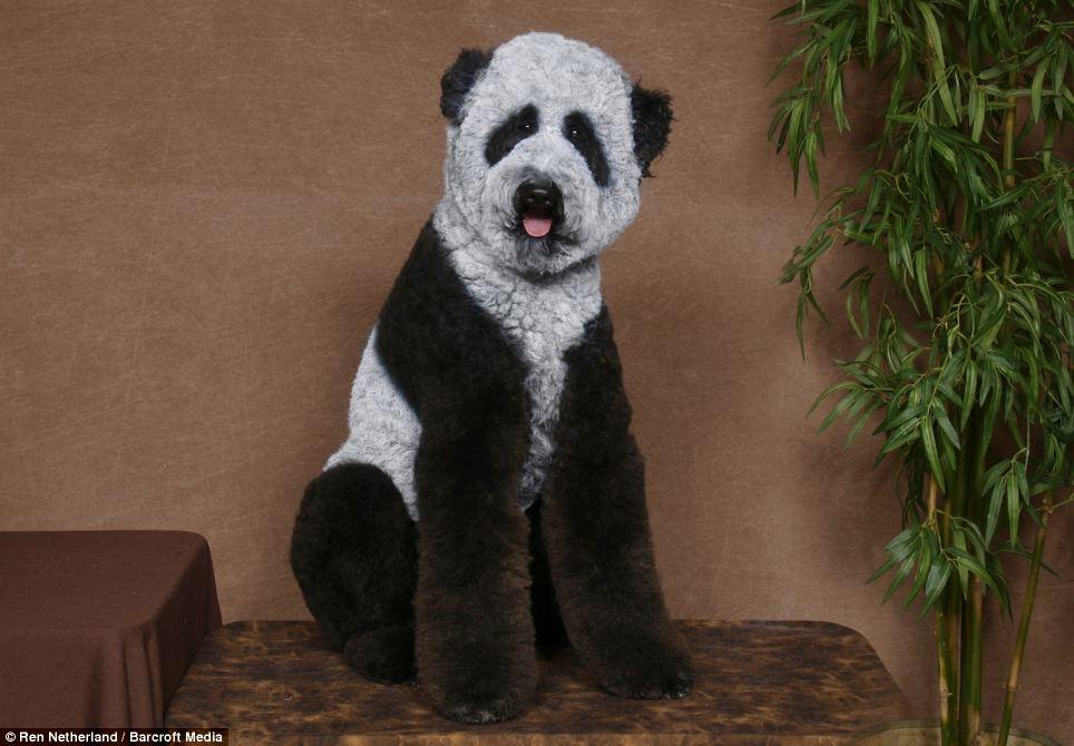 pandapoodle