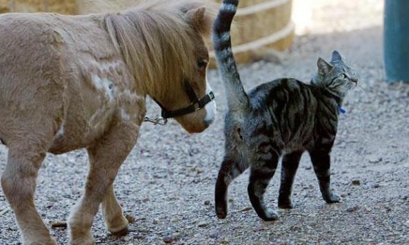 ponyfollowscat