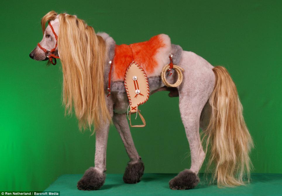 ponypoodle