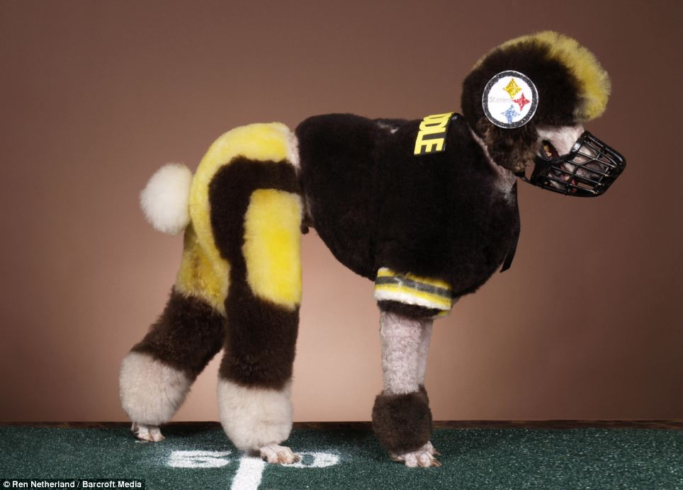 steelerspoodlewtf