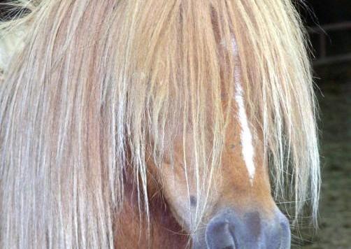 bad-hair-day-tracy-siebels