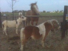 horsedonkeyhorse