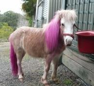 pinkhairpony