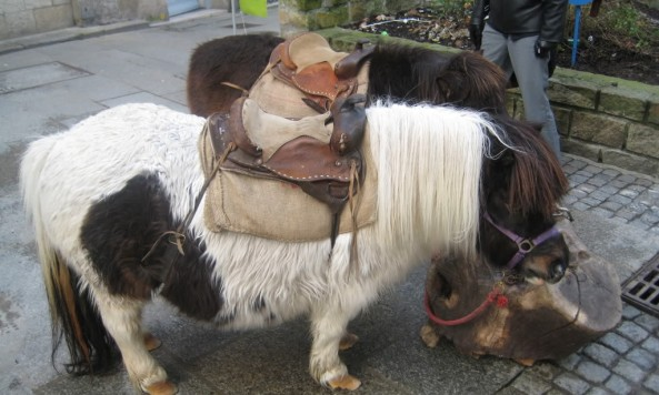saddlehorses