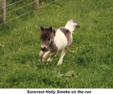 suncrest_holly_smoke_on_the_run