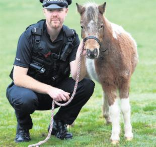 pc_andy_gamblin_and_the_shetland_pony.jpg.display