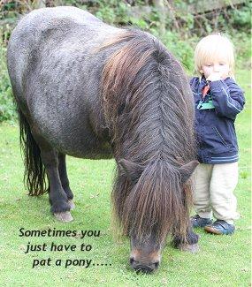 pony_1of3