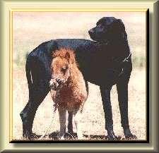 dog_horse3