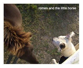 horse_romeo