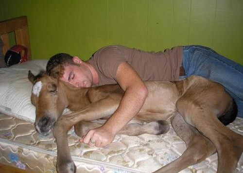 horsebed