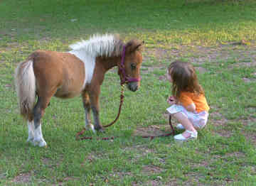 miniature-horse-0076