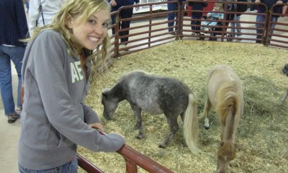 midget_horses