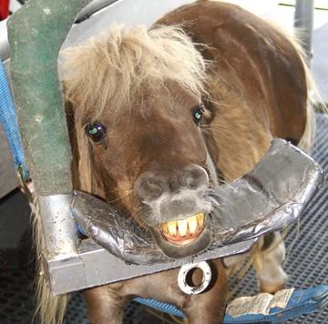 smilinghorse