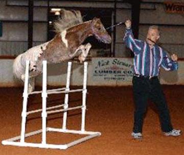 miniature-horse-0017