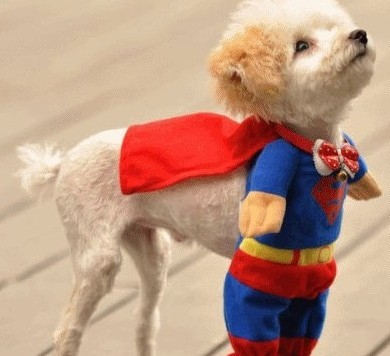 supermanpuppy