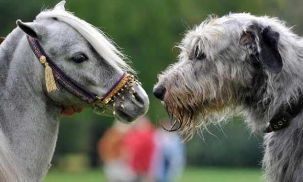horse_1498644i