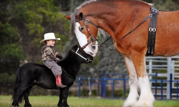 little-horse_1414911i